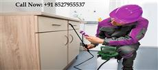 pestcontroldelhi