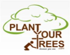 Plant Your Trees