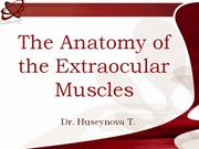 the anatomy of extraocular muscles