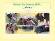 People For Animals Ludhiana PPT