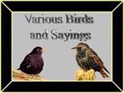 Birds Sayings
