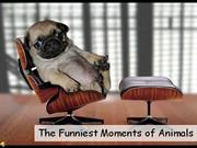 Funniest Moments of Animals