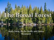 Boreal Forest Capstone