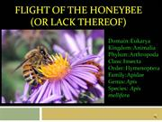 ccd and honeybees