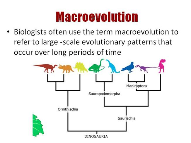 Convergent Evolution Diagram | www.pixshark.com - Images ...