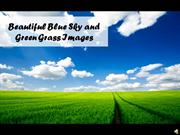 Beautiful Blue Sky and Green Grass Images