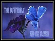 Thebutterfly_theflower