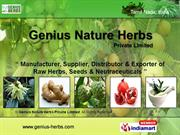 Natural Herbs(U To Z) By Genius Nature Herbs Private Limited