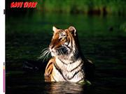 save the tigers ppt