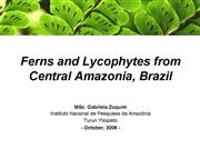 Ferns and Lycophytes from Central Amazon