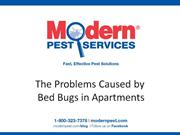 The Problems Caused by Bed Bugs in Apartments