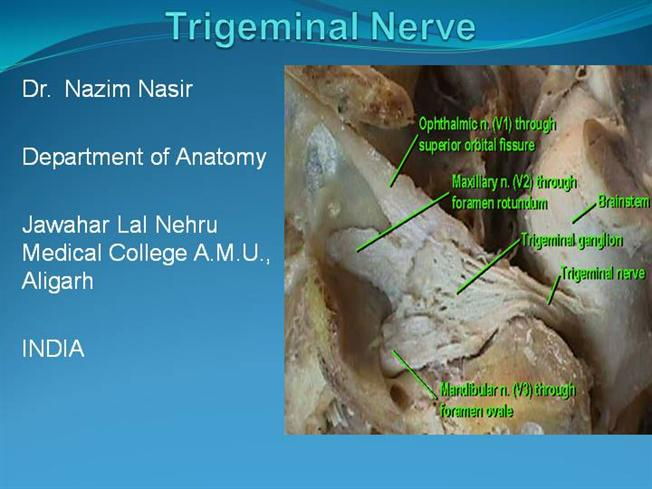 Trigeminal Nerve Authorstream