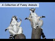 A Collection of Funny Animals