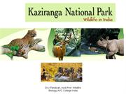 Kazhiranga National Park