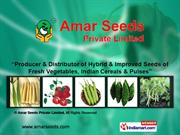 Existing Varieties By Amar Seeds Private Limited Pune