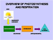 Photosynthesis and Respiration