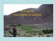 Soil Fauna in Ladakh