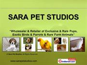 Farm Animals By Sara Pet Studios New Delhi
