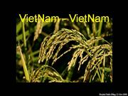 Viet Nam Viet Nam