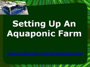 Setting Up An Aquaponic Farm