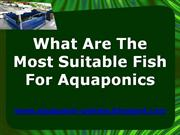 What Are The Most Suitable Fish For Aquaponics