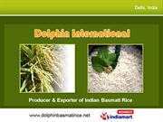 Hybrid Rice Varieties By Dolphin International, Delhi New Delhi