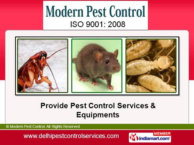 Ppt post-flowering stage insect pests powerpoint presentation.