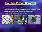 Houston Pigeon Removal (832) 356-9125