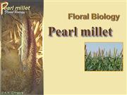 Pearl Millet Floral Biology