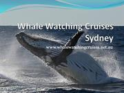 Whale watching cruises Sydney - Brass & Flinders