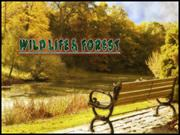 wildlife& forest