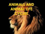 Animal and Animal Life Cycles