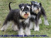 Copia di Le dieci preghiere del cane all'uomo3bb - Copia