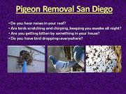 Pigeon Removal San Diego (619) 500-2473