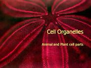 2.  Cell presentation--organelles copy