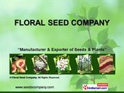 Flower Seeds By Floral Seed Company Dehradun