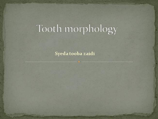 Tooth morphology |authorstream.