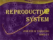 Reproductive System Powerpoint