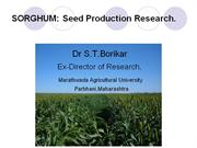 Sorghum Seed production Research