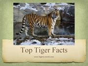 Top Tiger Facts