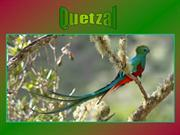 Quetzal (Ave Leyenda.Legend bird)