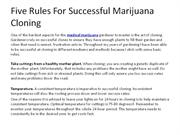 Five Rules For Successful Marijuana Cloning