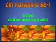 Cut Flower ID #2-1