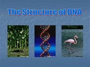 14703747-DNA-Overview