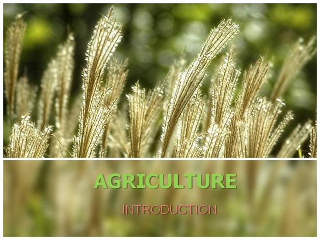 Agriculture in india authorstream toneelgroepblik Choice Image