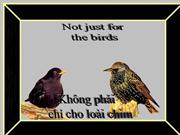 Khng phi ch cho loi chim- Not just for the birds