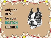 Boston Terrier Essentials