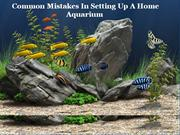 Common mistakes in setting up a home aquarium