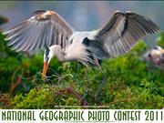 NG  Photo Contest 2011