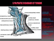 lympahatic drainage of tongue